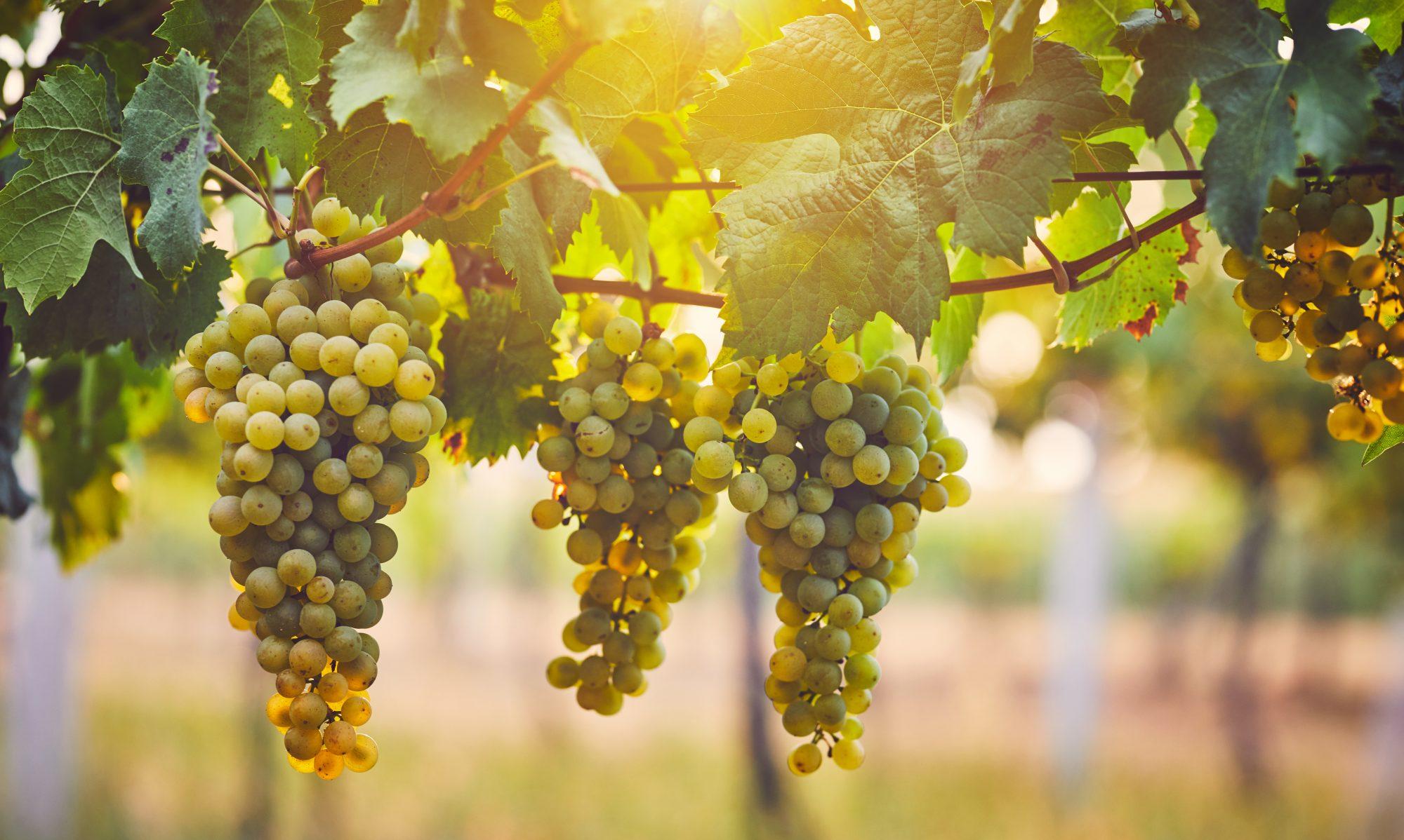 Nettavisens vinmesse